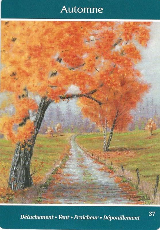 37 automne