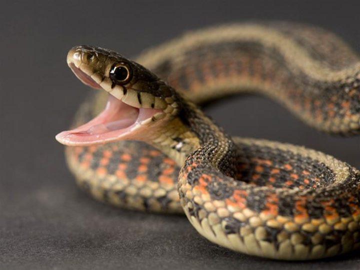 Image de serpent 8