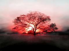 Ob 475c85 bel arbre 16 1