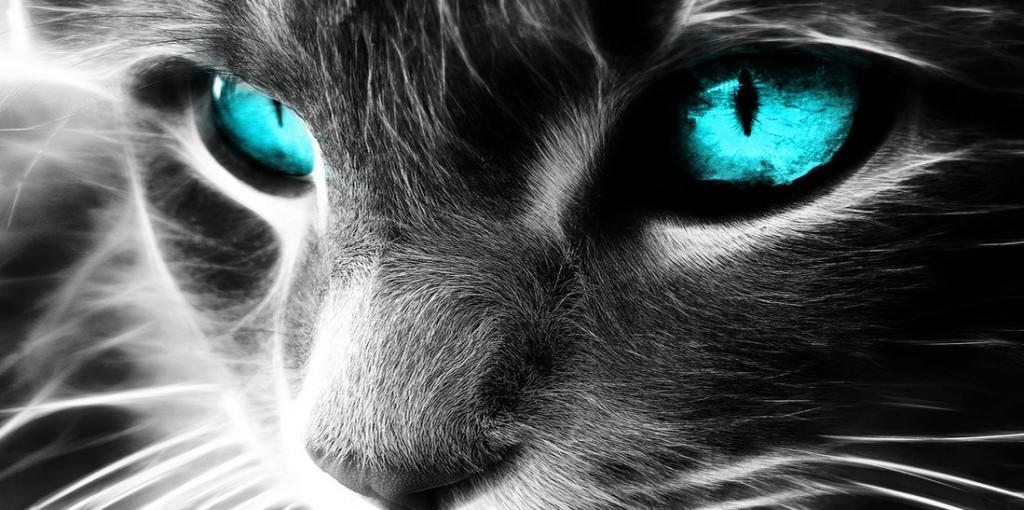 Spiritual cat 2 1024x510 1024x510